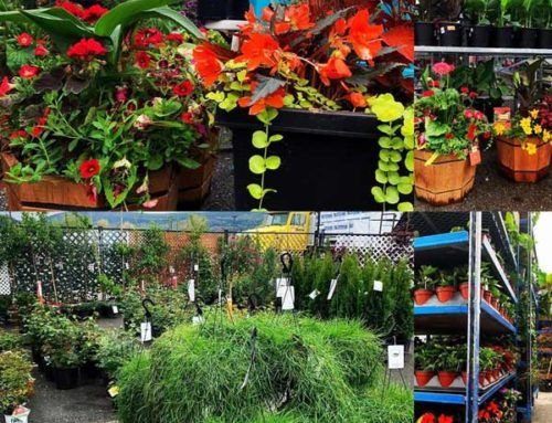 Annuals, Flowers, Plants, Vegetables in Kelowna