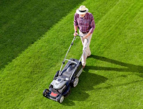 Here's How to Choose a Lawnmower